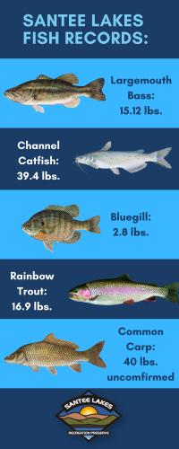 santee lakes fish records_